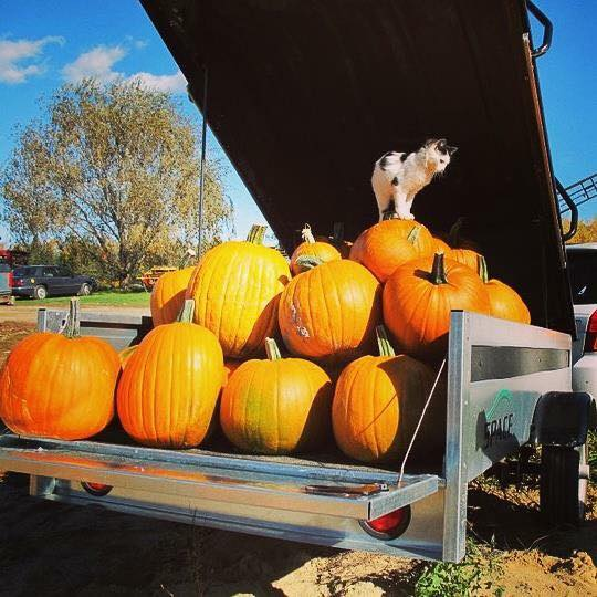 space trailer with pumpkins